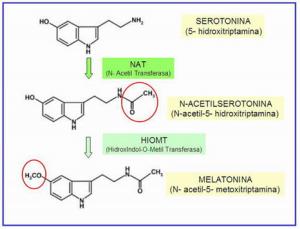 Serotonina e melatonina