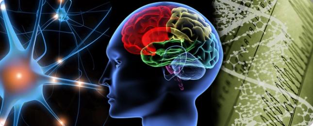 NeuroBrain